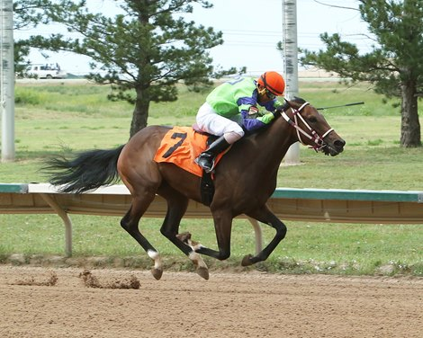 Small Crop Freshman Sires Beating The Odds Bloodhorse
