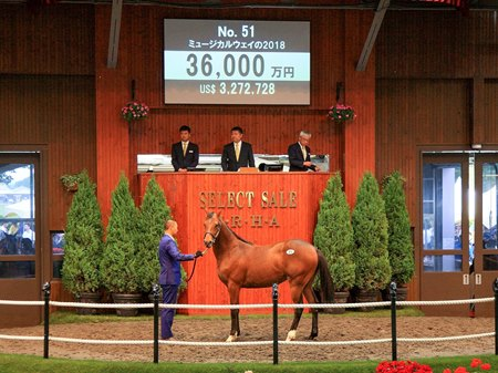 Deep Impact Colt Leads Record JRHA Select Sale - BloodHorse