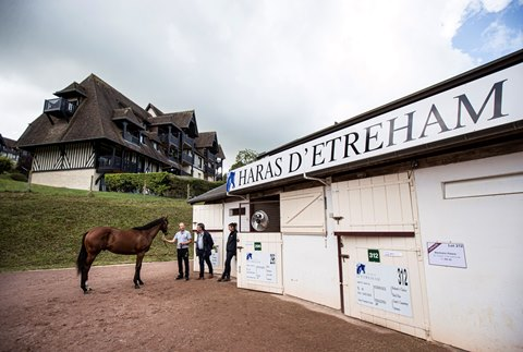 Shalaa Filly Leads the Way in Arqana v2 Sale