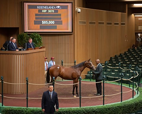California Chrome Colt Tops Keeneland Session 11