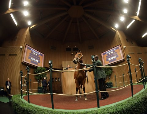 BloodHorse: Thoroughbred Horse Racing, Breeding, and Sales