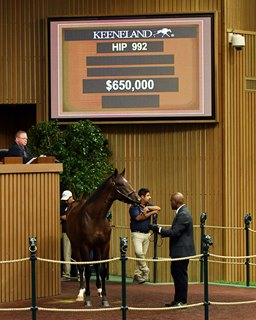 Union Rags Colt Great Value for Mayberry Farm