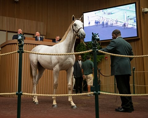 Godolphin to $2.5 Million for Nyquist Half Brother