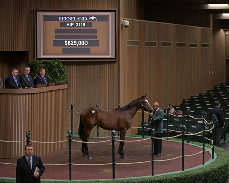 The Quality Road colt consigned as Hip 2110 in the ring at the Keeneland September Sale