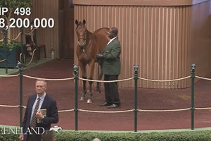 Keeneland Sept Yearling Sale: Hip 498 in the Ring