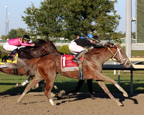 Math Wizard Breezes at Gulfstream for Breeders' Cup