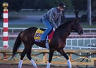 War of Will trains ahead of the Breeders' Cup at Santa Anita Park