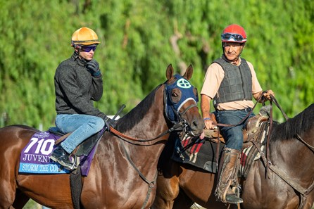 Storm the Court working at Santa Anita, 10-25-19