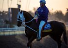 Larry Jones rides grade 1 winner Street Band at Santa Anita Park in preparation for the 2019 Breeders' Cup Distaff
