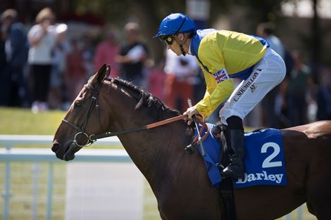 Marmelo to Stand at Norton Grove Stud for 2022