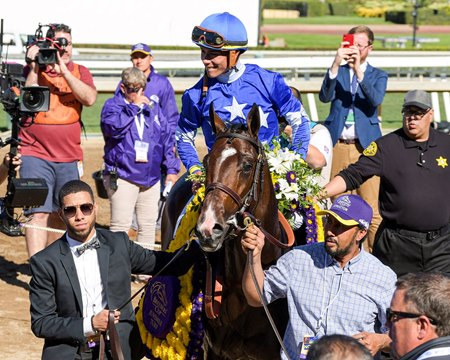 Structor enters the winner's circle after the Breeders' Cup Juvenile Turf at Santa Anita Park