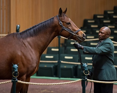 Elevage Mares In Demand At Keeneland November Bloodhorse