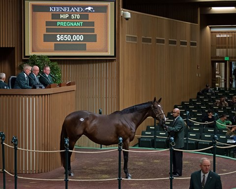 Keeneland November Sale Enters New Phase