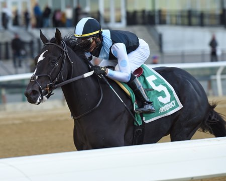 Independence Hall finishes 12 1/4 lengths ahead in the Nashua Stakes at Aqueduct Racetrack