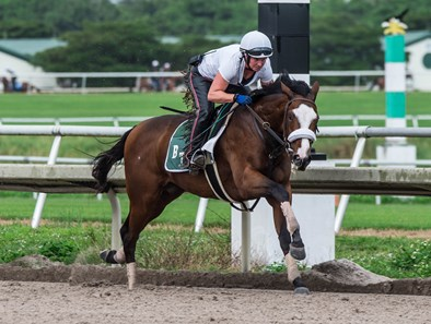 Tiz the Law - Morning - Palm Meadows - 123019
