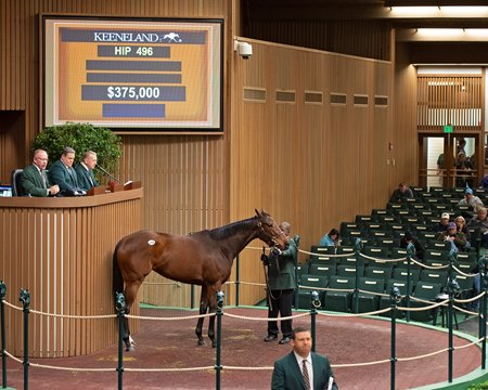 Tiz Breathtaking was among several six-figure offerings from the Eaton Sales consignment on the second day of the Keeneland January Sale