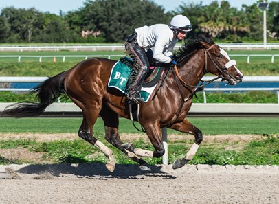 Tiz the Law - Morning - Palm Meadows - 010520