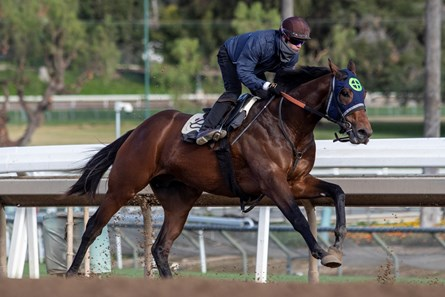 Storm the Court works under jockey Flavien Prat at Santa Anita Park for trainer Peter Eurton, 1.19.2020