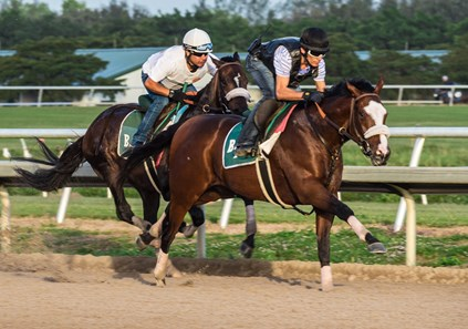 Tiz the Law - Morning - Palm Meadows - 011220
