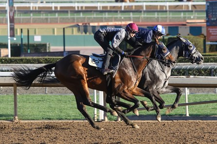 Storm the Court (outside, Flavien Prat) works at Santa Anita Park for trainer Peter Eurton, 2.2.2020