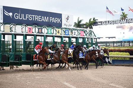 Horses break from the gate at Gulfstream Park
