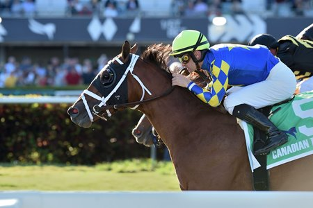 Sombeyay scores a graded win on grass in the Canadian Turf Stakes at Gulfstream Park