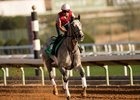 Tacitus trains this year at King Abdulaziz Racetrack in Saudi Arabia