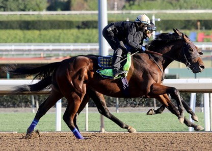 Nadal Horse Profile Bloodhorse