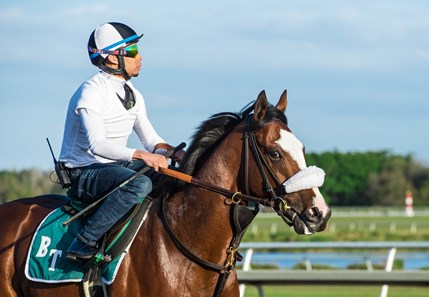 Tiz the Law - Morning - Palm Meadows - 030220