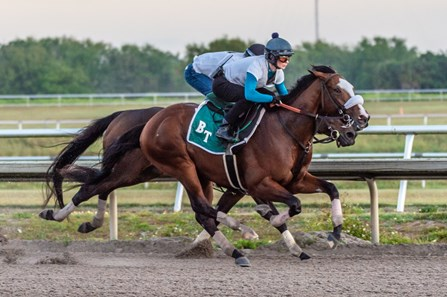 Tiz the Law - Morning - Palm Meadows - 031520