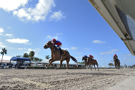 Swiss Skydiver wins 2020 Gulfstream Park Oaks