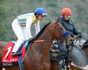 Nadal Horse Profile Bloodhorse