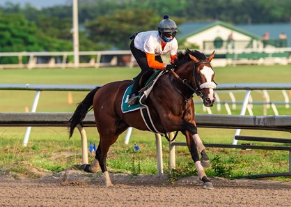 Tiz the Law - Morning - Palm Meadows - 042620