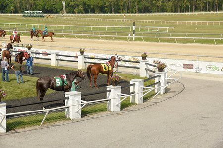 A horse looks out over an empty track apron at Tampa Bay Downs