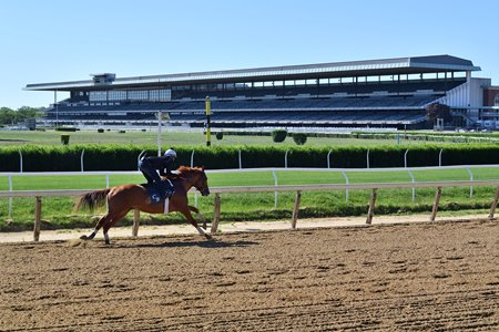 A horse trains on the main track at Belmont Park