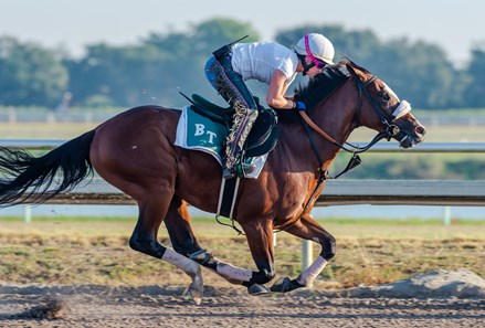 Tiz the Law - Palm Meadows - May 9, 2020