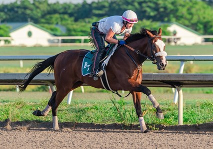 Tiz the Law - Palm Meadows, May 2, 2020