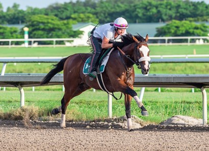 Tiz the Law - Morning - Palm Meadows - 053120