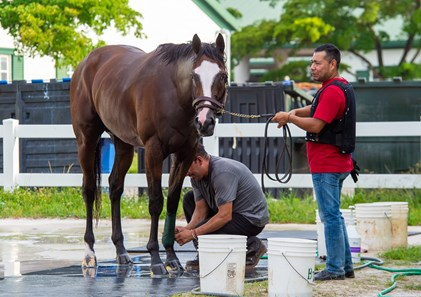 Tiz the Law - Palm Meadows - May 18, 2020