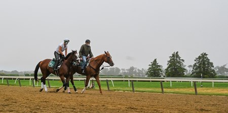 Morning line favorite Tiz the Law is lead back to the barn after his morning exercise Friday June 19, 2020 the day before he will appear in the 152nd running of The Belmont Stakes on Saturday June 20th at Belmont Park in Elmont, N.Y.