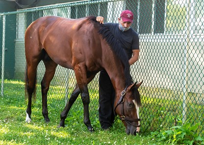 Sackatoga Stable's Tiz The Law, trained by Barclay Tagg, the 2020 Belmont Stakes, (GR I), winner,  grazing by the barn, the morning after his win, with barn foreman Juan Barajas Saldana., on Sunday, June 21, 2020