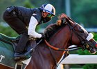 Tiz the Law works a half-mile June 14 at Belmont Park