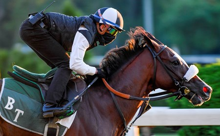 Tiz the Law heads works the main track Sunday June 14, 2020 in Elmont, N.Y. at the Belmont Race Course for his final speed work before the Belmont Stakes which will run next Saturday June 20th. Tiz the Law worked 50.42.   Photo by Skip Dickstein