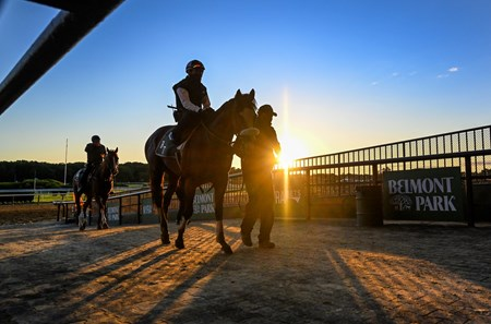 Tiz the Law returns to the barn after his work as the sun rises on Belmont Park June 14, 2020 in Elmont, N.Y. Photo by Skip Dickstein