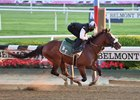 Tiz the Law works June 14 at Belmont Park