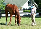Sharing grazes after breezing June 12 at Fair Hill
