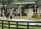 OBS scenics June 2020, OBS Spring 2 Y O in Training
