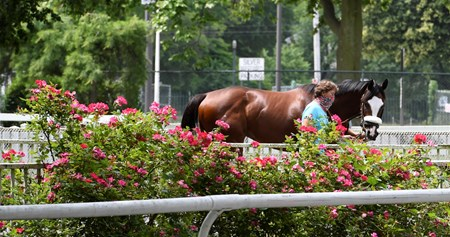 Belmont entrant Tiz the Law trained by Barclay Tagg schools in the paddock at Belmont Park Thursday June 18, 2020 in Elmont, N.Y