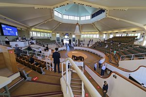 The view inside the pavilion at the 2020 Tattersalls Craven Breeze Up Sale