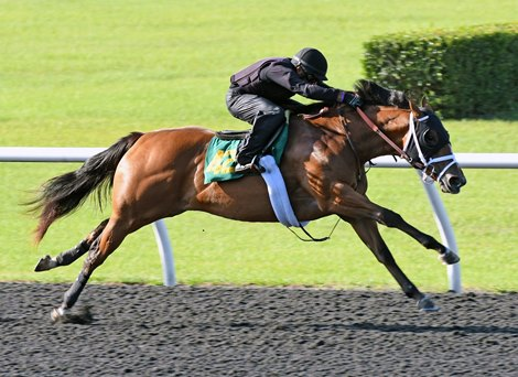 Into Mischief Filly Shines for Sierra, Bradshaw
